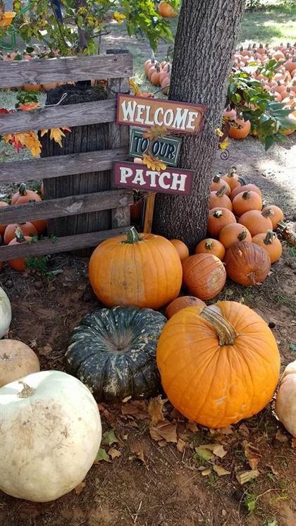 Oklahoma pumpkin patches moreguthrie.
