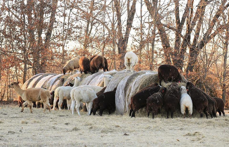 Shepherd Storage Okc
